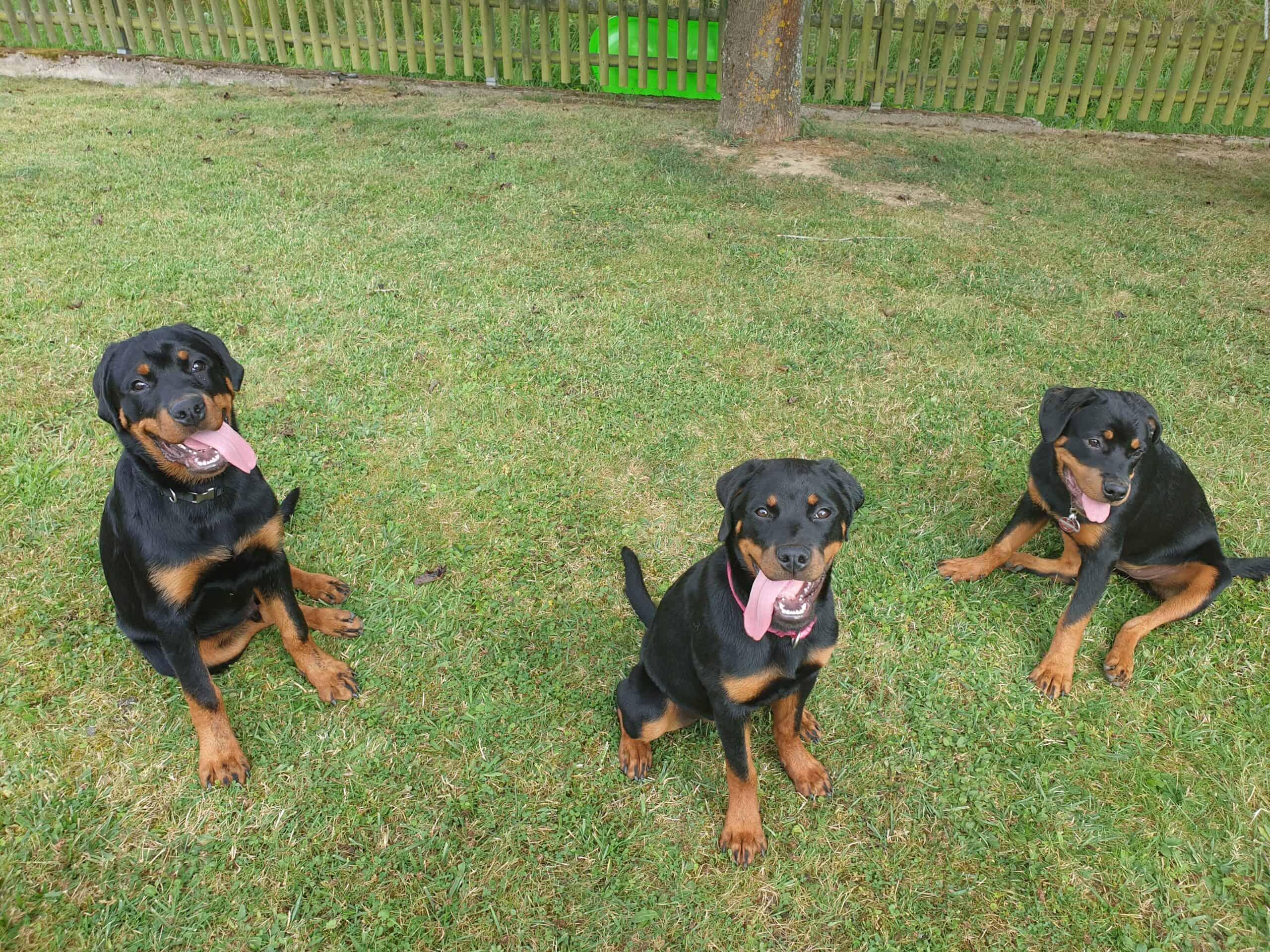 Hündin Hope und 2 ihrer Geschwister