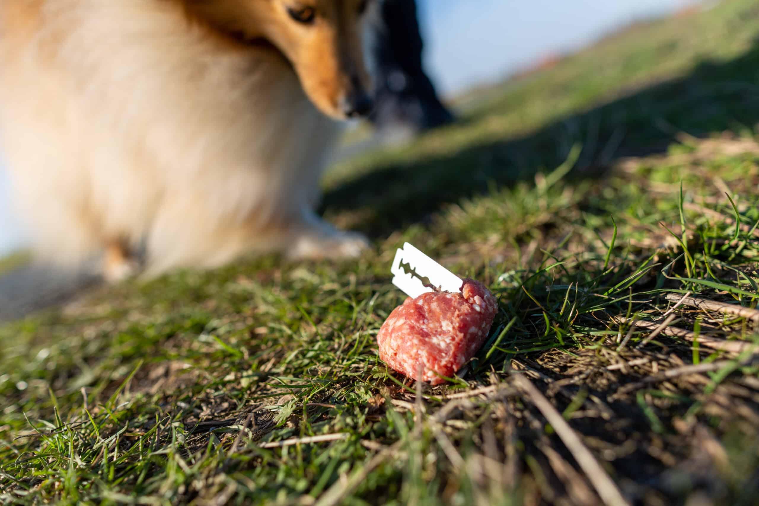 Hundeköder mit Rasierklinge.